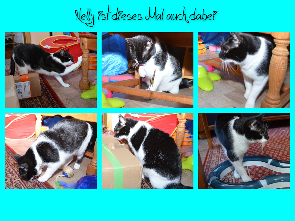 Das TigerKuhkatzenTeam Knubbel, Piri, Findus und Nelly