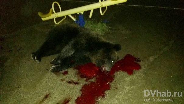 видео об убийстве белого медведя