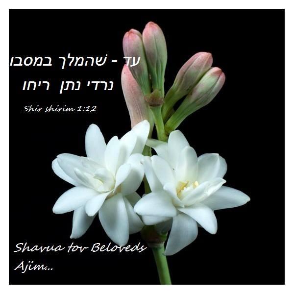 Biblijski citati i pjesme Nq3l9sir