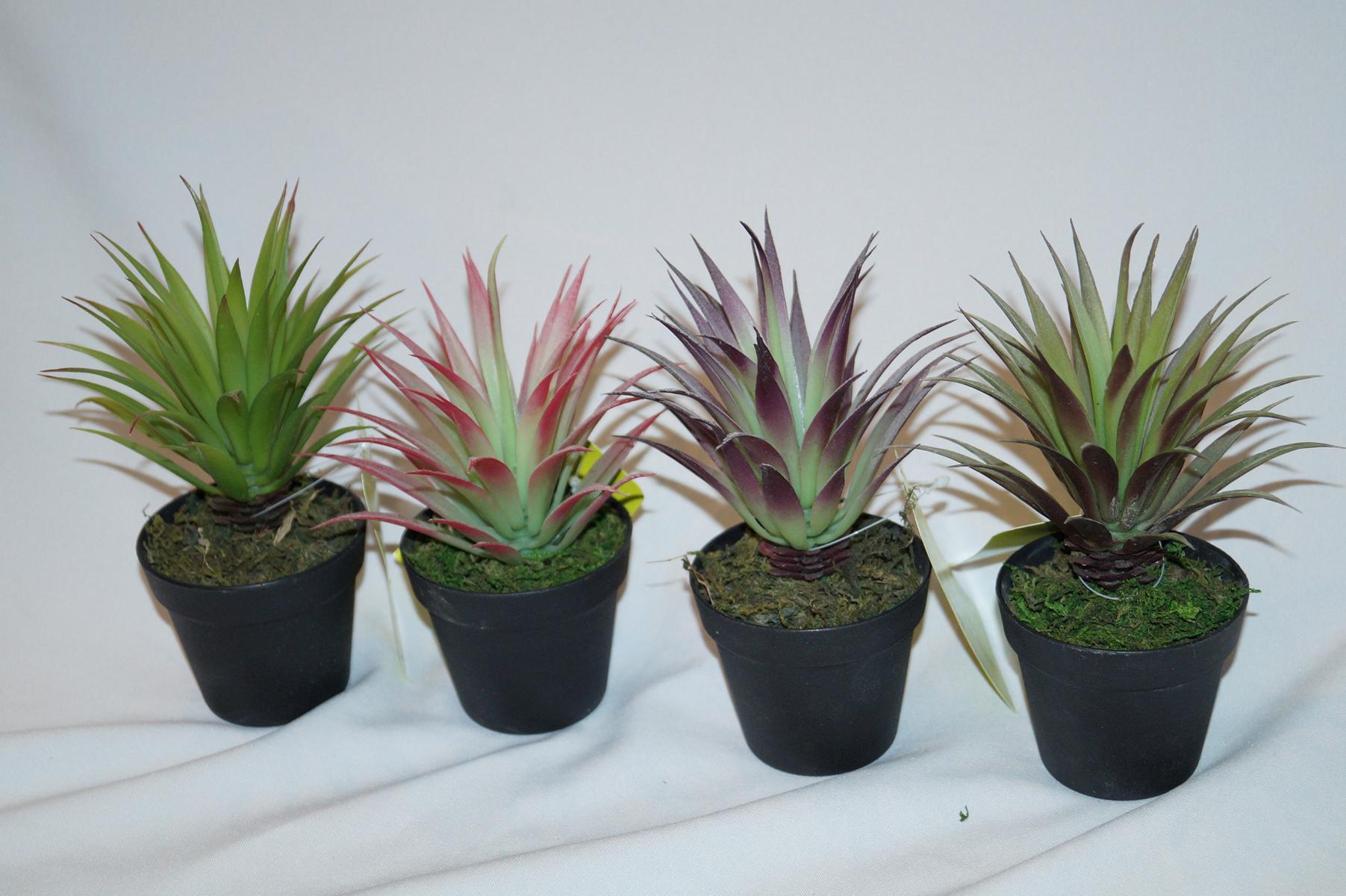 Cactus 20 cm pianta artificiale bonsai pianta grassa for Bonsai pianta