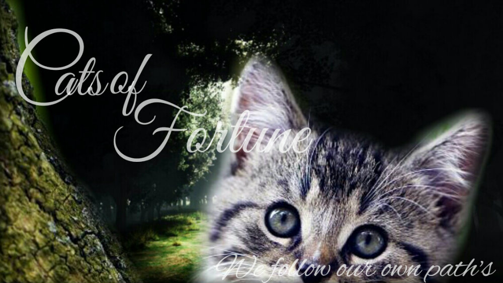 Cats of Fortune