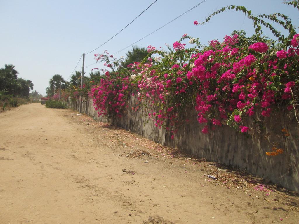 Urlaub Gambia 2016 - Seite 3 Vk94v4tc