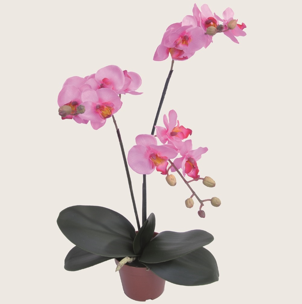 pinke orchidee phalaenopsis h44cm getopft kunstblumen kunstpflanzen k nstlich ebay. Black Bedroom Furniture Sets. Home Design Ideas