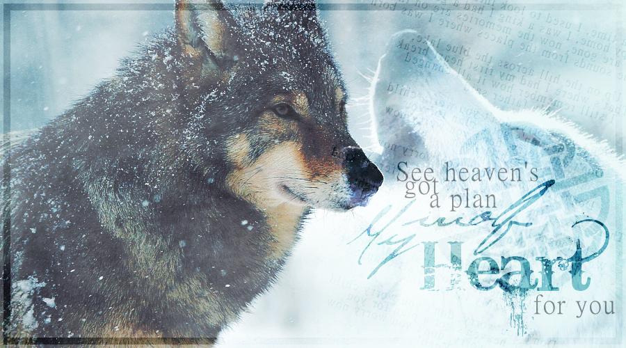 Werdet ein Teil der Welt der Wölfe!