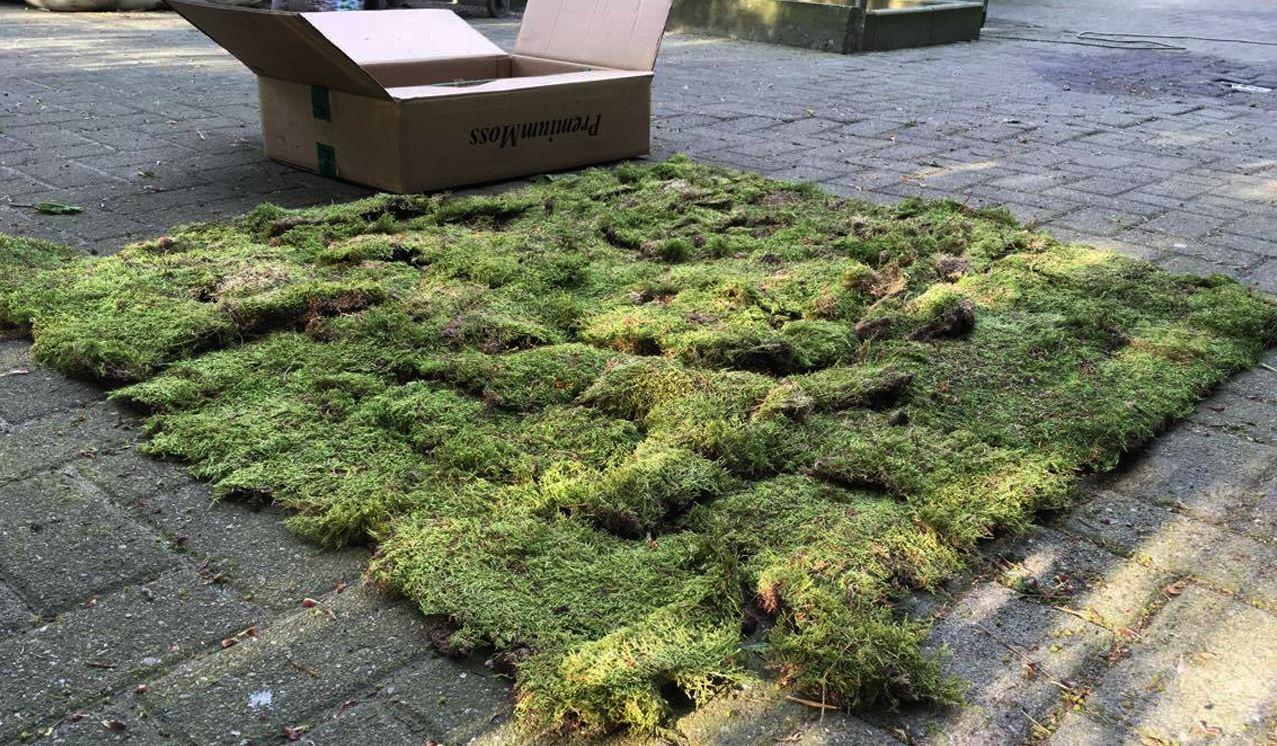 Karton deko moos herbst moosmatten moosplatten waldmoos for Hydrokultur design