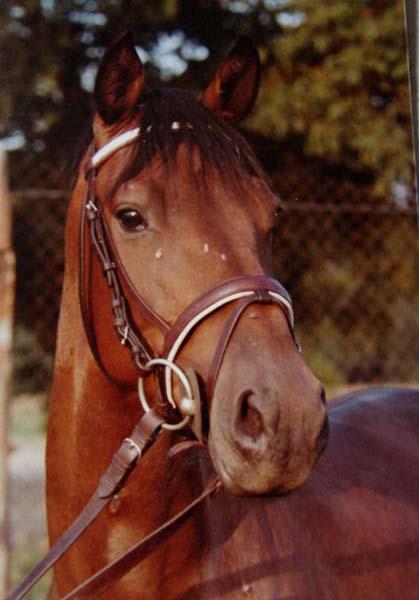 widersetzlichkeit junges pferd