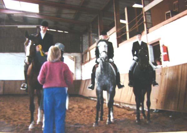 pferd erblindet und jetzt