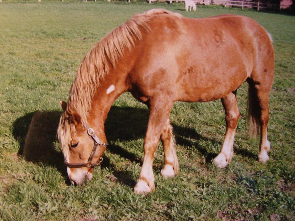pferd euter entuendet