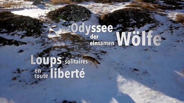 : Die Odyssee der einsamen Woelfe e01 German doku 720p webhd h264 btvg