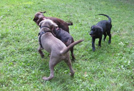 : Die Hundeschule Nachsitzen fuer Hund und Herrchen german doku ws dTV XViD SiTiN