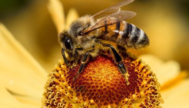 : Bienen Nicht nur suesser Honig German doku 720p hdtv x264 TVARCHiV
