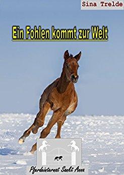 : Trelde, Sina - Pferdeinternat Sankt Anna 29 - Ein Fohlen kommt zur Welt