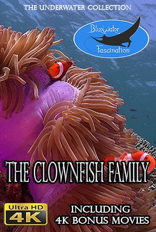 Clownfish.2016.2160p.WEB-DL.AAC2.0.x264-ULTRAHDCLUB
