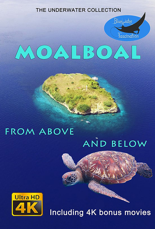 Moalboal.Night.Dive.2016.2160p.WEB-DL.AAC2.0.x264-ULTRAHDCLUB