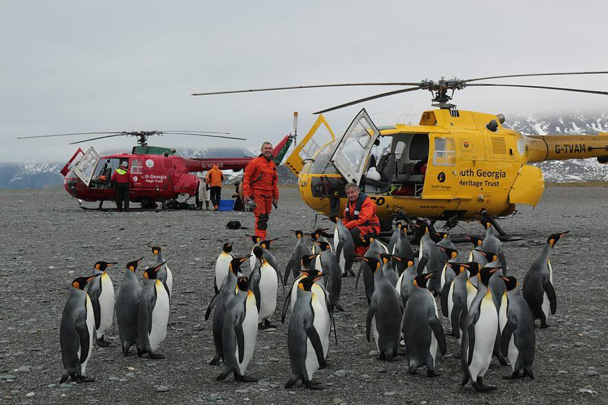 : 360 Grad Geo Reportage Bird Island Allein unter Pinguinen German doku 720p hdtv x264 TVARCHiV