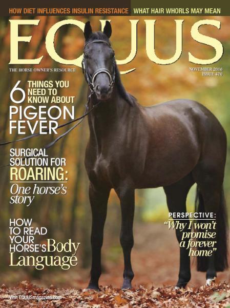 : Equus - November 2016