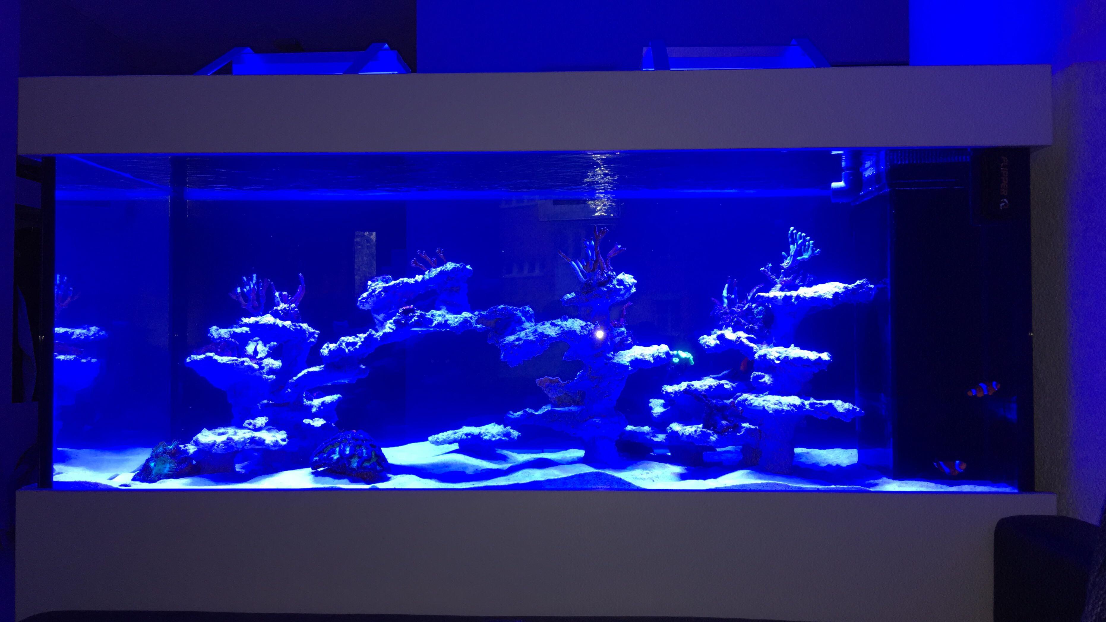 wtp3usbx Frais De Aquarium Recifal Complet Concept