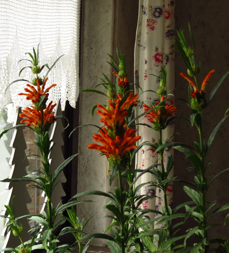 Bild: http://fs5.directupload.net/images/161217/8gku4ubs.jpg