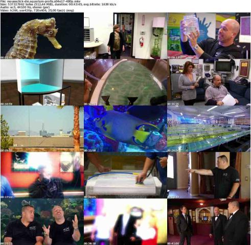Die.Aquarium-Profis.S04E17.GERMAN.DOKU.WEBRip.x264-MOUSECLiCK