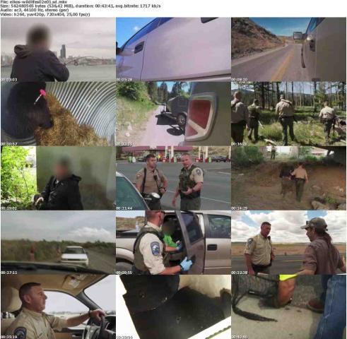 Die.Wildlife.Cops.S02E01.Im.Namen.des.Gesetzes.GERMAN.DOKU.WEBRiP.x264-ELKOS