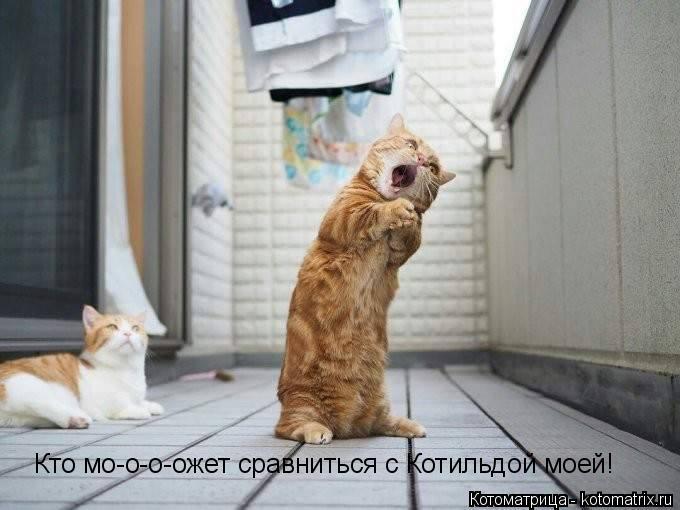 Первая свежая котоматрица в июне