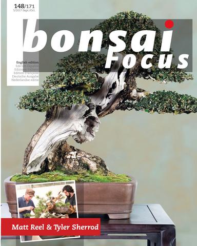 Bonsai Focus 09 10 2017