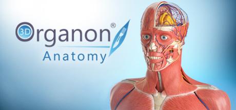 3D Organon Anatomy 2017