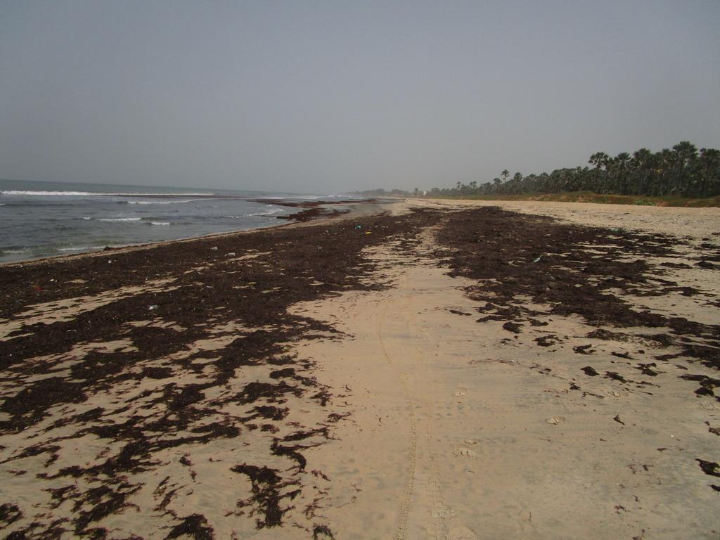 Urlaub Gambia 2017 - Nr. 2 Lz6xt3c5