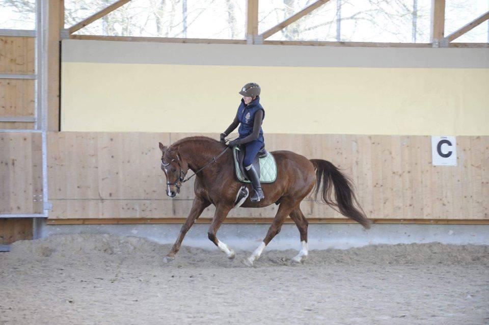kochsalzlösung zum inhalieren pferd
